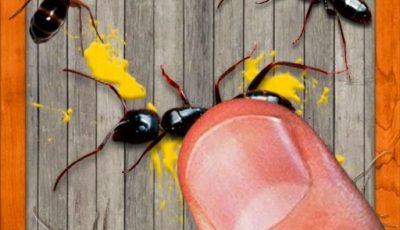 لعبة سحق الحشرات العاب اونلاين مجانية smash the insectt